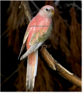 The finch from -wide Range of Birds for sale