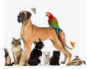 Pets make the World a Better Place!