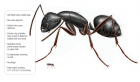 Know about Habitats of Pavement Ants