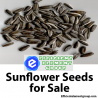 Get the Best Quality Sunflower Seeds Online from Efficient Element Group