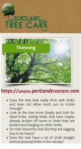 Hire professionals for tree trimming services in Troutdale